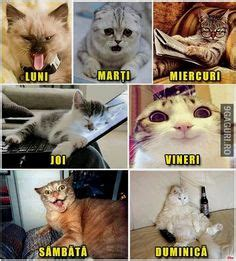 Cute+LEGO+Sayings | terms funny animal quotes funny cats